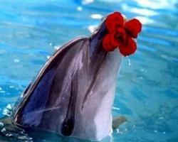 Прикосновение к счастью и радости с помощью Скадовского дельфинария.