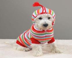 Почему одежда для собак в Казани становится все популярнее?