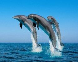 Бассейн дельфин — место здорового времяпровождения