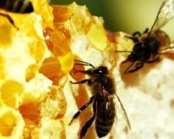 Чудо-средство мед пчелиный