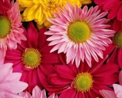Цветочный ажиотаж