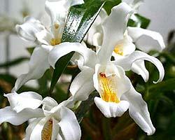Букеты из орхидей от Мосцветторга: для составления композиции используются только свежесрезанные цветы!