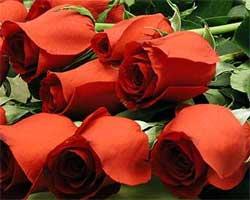 Я женщина! И я хочу цветов!