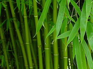 Что такое бамбуковое волокно и каковы его свойства?