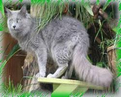 Корма для кошек и собак от компании «Ёжкин-кот»